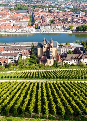 Weinberg in Würzburg