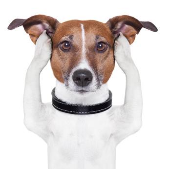 Hund hält sich Ohren zu