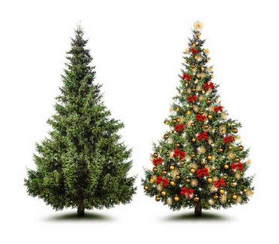 Ungeschmückter und geschmückter Weihnachtsbaum