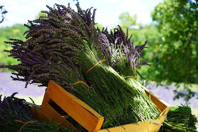 Lavendelöl gegen Nagelpilz